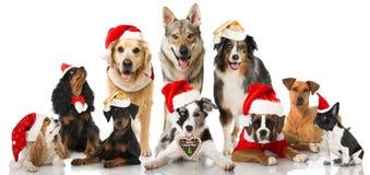 Chiens de Noël Images stock