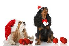 Chiens de Noël photographie stock