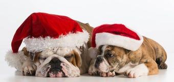 Chiens de Noël Photos libres de droits