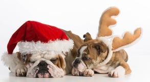 Chiens de Noël Images libres de droits