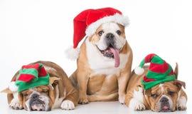 Chiens de Noël photos stock