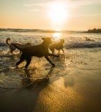 Chiens de plage photographie stock libre de droits