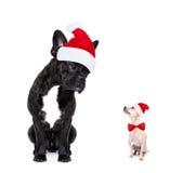 Chiens de Santa de Noël Photos libres de droits