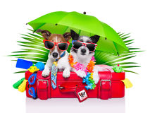 Chiens de vacances Photos libres de droits