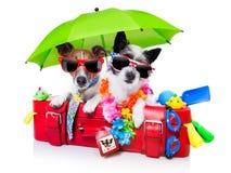 Chiens de vacances Photos stock