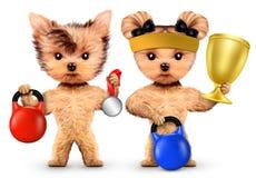 Chiens drôles s'exerçant avec des kettlebells dans le gymnase de sport Images stock
