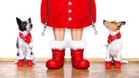 Chiens du père noël de Noël Photos libres de droits