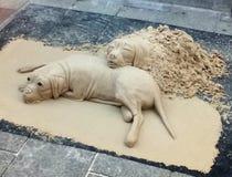 Chiens du sable image stock