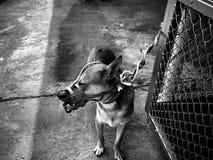 chiens et chats dans le jour de rage du monde, stérilisation chirurgicale des chiens, vaccin de rage de chats Photo stock