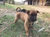 chiens et chats dans le jour de rage du monde, stérilisation chirurgicale des chiens, vaccin de rage de chats Images stock