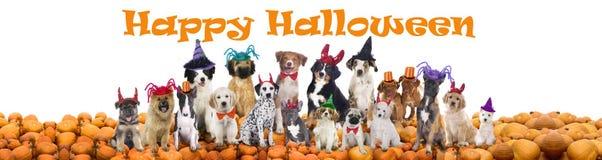 Chiens heureux de Halloween Photos stock
