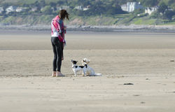 Chiens obéissants sur la plage avec la femme photos stock