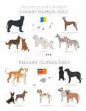 Chiens par le pays d'origine Races de chien de canari et d'Îles Baléares Ensemble de chiens de bergers, de chasse, de rassembleme illustration stock