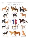 Chiens par le pays d'origine Races fran?aises de chien Ensemble de chiens de bergers, de chasse, de rassemblement, de jouet, de f illustration libre de droits