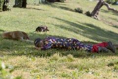 Chiens sans abri de sommeil d'homme Photographie stock libre de droits