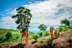2 chiens sur la montagne Photo libre de droits