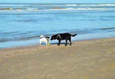 Chiens sur le sable, bord de la mer Photo stock