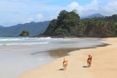 Chiens sur une plage Photo libre de droits
