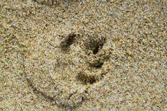 Chiens sur une plage Images libres de droits