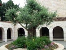 Chiesa della moltiplicazione, Tabgha, Israele fotografia stock libera da diritti