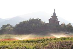 Chiesa nel fleld del fiore Immagine Stock Libera da Diritti