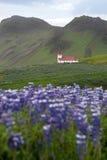 Chiesa in Vik, Islanda Fotografie Stock