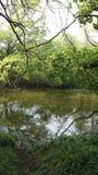 Chieveley村庄森林英国 免版税库存图片