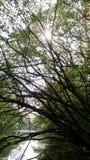 Chieveley森林 免版税库存照片