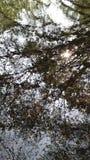 Chieveley wioski drewna zdjęcie royalty free