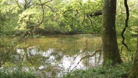 Chieveley wioski drewna Anglia fotografia stock