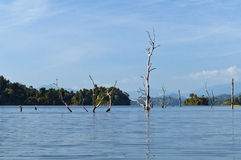 Cheow Lan Lake (Rajjaprabha Dam Reservoir), Thaila Stock Image