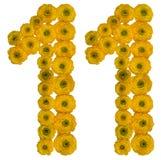 Chiffre arabe 11, onze, fleurs jaunes de ROM de la renoncule, isolant Images stock