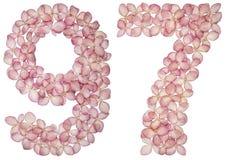Chiffre arabe 97, quatre-vingt-dix-sept, des fleurs d'hortensia, d'isolement sur le fond blanc illustration stock