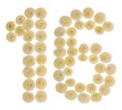 Chiffre arabe 16, seize, des fleurs crèmes du chrysanthème, Photo stock