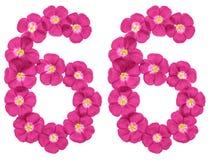 Chiffre arabe 66, soixante-six, des fleurs roses du lin, d'isolement sur le fond blanc illustration libre de droits