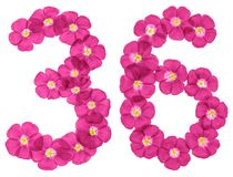 Chiffre arabe 36, trente-six, des fleurs roses du lin, d'isolement sur le fond blanc illustration stock