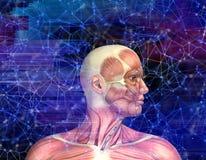 chiffre 3D médical masculin avec la carte de muscle sur le backgroun de style de techno illustration stock