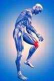 chiffre 3d masculin médical avec le genou douloureux Images libres de droits