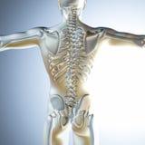 chiffre 3d masculin médical avec le squelette Photos stock