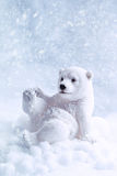 Chiffre d'ours blanc Images stock