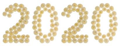 Chiffre 2020 des fleurs crèmes du chrysanthème, d'isolement sur le wh Image libre de droits
