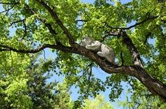 Chiffre en bois lynx Images stock