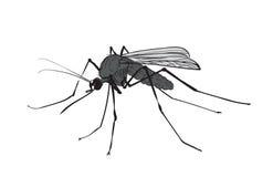 Chiffre encre de photo de moustique Image libre de droits