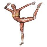 Chiffre femelle d'anatomie illustration de vecteur