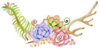 Chifre da aquarela com planta carnuda, cacto, flor e samambaia Fotos de Stock Royalty Free