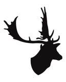 Chifre dos cervos Fotografia de Stock Royalty Free