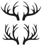 Chifres dos cervos Imagens de Stock