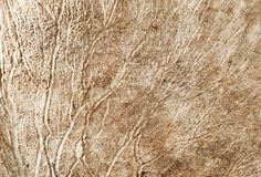 Chifres dos cervos macro Imagem de Stock