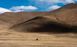 Chigetai unter Berg Lizenzfreie Stockfotografie