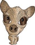 chihuahua κινούμενων σχεδίων Στοκ Εικόνα
